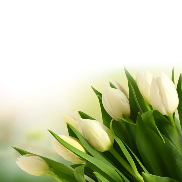 flower-back1330